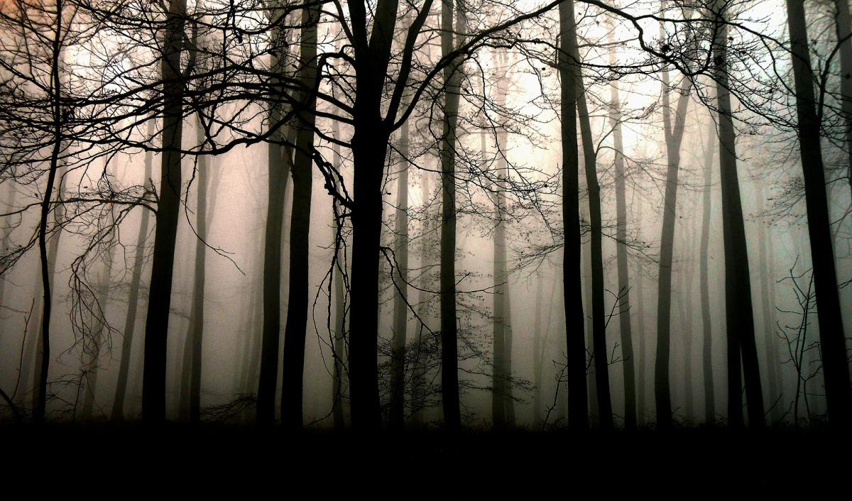 Les Forêts de Ravel de Michel Bernard